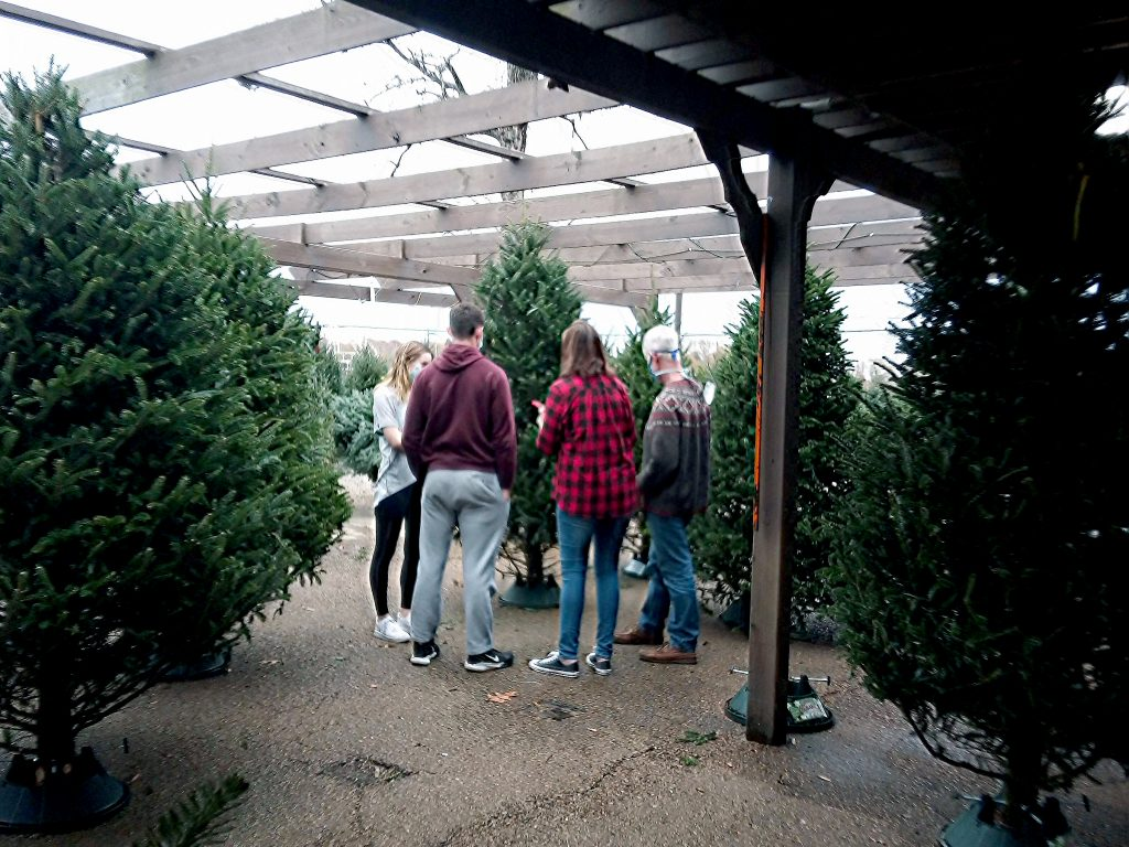 At Country Gardens, tree shoppers hunt for that semblance of normalcy.